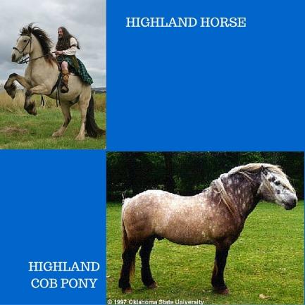 SCOT.HORSES.jpg